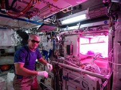 Astronauts Grow Lettuce in Space