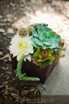 Succulent flower arrangement; smaller container and not a ton of floral make this a pretty affordable centerpiece. We can add votives around it as well.