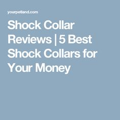 Shock Collar Reviews | 5 Best Shock Collars for Your Money Cool Dog Collars, Dog Shock Collar, Future Farms, Best Dog Training, Training Collar, Dog Accessories, Puppy Love, Best Dogs, How To Find Out