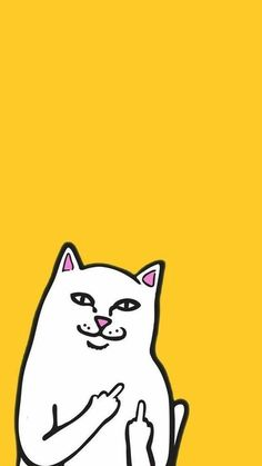 Funny Cat Flipping you off wallpaper #CatWallpaper
