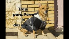 TRAJE para PERRO muy calentito y cómodo.🐕 Lana, Dogs, Animals, Youtube, How To Knit, Tejidos, Animales, Animaux, Pet Dogs