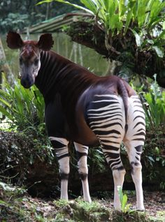 Okapi Conservation Center Recovering after Militia Attack that Killed 6 People and 14 Animals