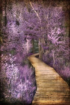 ~~Springtime in Michigan ~ the wooden deck trail abundant with pink and lavender flowers around Hamlin Lake, Ludington State Park by Evie Carrier~~