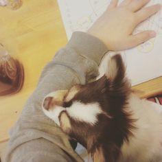 양해연 @chokomi123 킁킁.Instagram photo | Websta (Webstagram)