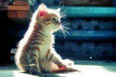 Cute kittens - 9 Pics  (8)