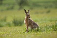 Bleasdale Cottages wildlife diary: Live on Hare from Bleasdale.