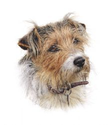 Many new dog images from our new artist, Aron Gadd!