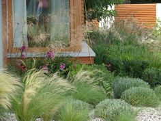 Modern garden with stipa, lavendula, buxus and deshapsia