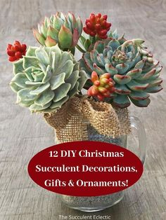 Make 2020 merry and bright with Christmas succulents DIYs! Succulent decorations, succulent gifts and succulent ornaments to hang on the Christmas tree! Add a pinecone, a red ribbon or a jingle bells to add to the holiday feel!  #christmassucculents #succulentgifts #succulentdecorations #succulentornaments #succulentDIYs #succulkentprojects