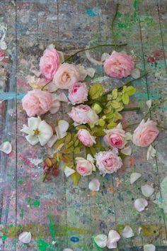 umla:  (via Pin by Habibe Kavak on flowers | Pinterest)