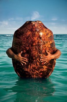 A hawksbill turtle shell off (you guessed it) Turtle Island in Fiji