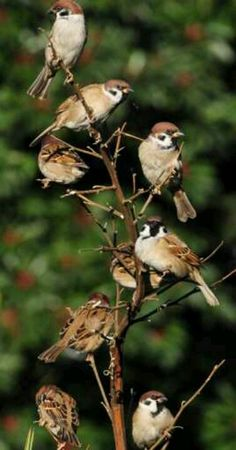 The Sparrow Nest Sparrow Nest, Sparrow Bird, Baby Sparrow, House Sparrow, Animals Of The World, Animals And Pets, Cute Animals, Bird Pictures, Animal Pictures