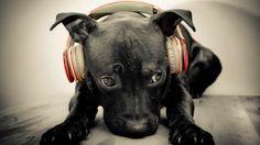 Funny DJ Dog