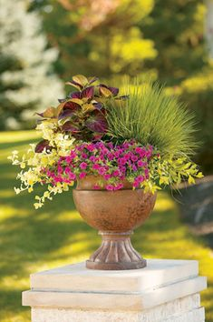 Container Gardening Ideas Party of Five, by Proven Winners Container Size: 24 inches, Exposure: Sun Superbells® Pink calibrachoa Northern Lights tufted hairgrass Gold Mound duranta Lemon Licorice licorice plant ColorBlaze® Kingswood Torch coleus Container Flowers, Container Plants, Container Gardening, Container Size, Evergreen Container, Garden Planters, Planter Pots, Planter Ideas, Balcony Garden