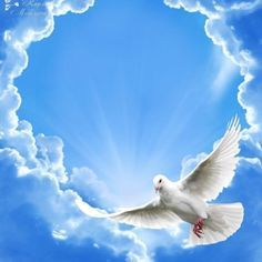 Dove Images, Dove Pictures, Nature Pictures, Angel Pictures, Beautiful Nature Wallpaper, Beautiful Birds, Heaven Pictures, White Pigeon, Image Jesus