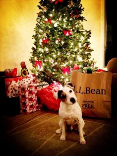 Jack was very good this year.  #LLBean