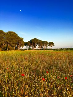 The Puglia gardens of Amberlair, a crowdsourced and crowdfunded hotel that will be the region's first luxury boutique hotel.