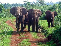 Aberdares Mt. Kenya  CC MacKenzie WANA Commons