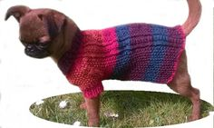 XXS knit Dog Coat, Cable design, Extra Small dog clothing, Small Dog Clothes, Teacup clothing, Puppy Clothes, Puppy Jumper, puppy sweater UK - pinned by pin4etsy.com