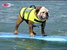 Best of 2010 Helen Woodward Surf Dog Surfing Contest http://www.youtube.com/watch?v=PFmBvGALNH0