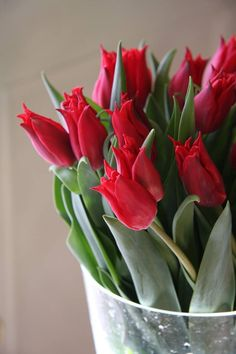 Red Tulips | from Garden Picture