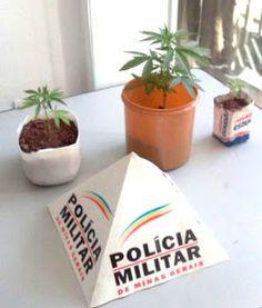 Folha do Sul - Blog do Paulão no ar desde 15/4/2012: PM  recebe denúncia e apreende pés de maconha