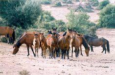 Petala Mountain feral horse (Amfilochia and Agrinio, Greece). Θέματα περιβάλλοντος