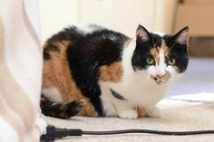 Super rare moggy helps Taunton artist through illness (From This is The West Country)