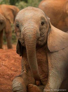 Amazing wildlife - Baby elephant photo #elephants