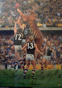 gotta love tigers. Richmond Football Club, Australian Football League, Yellow Black, Animals And Pets, Lions, Man Cave, Olympics, Melbourne, Dallas