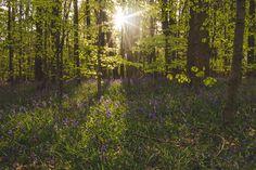 #woodland #sunset
