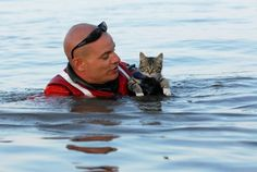 A kitten rescued from the water..after a flood.