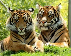 bima & jaya | Point Defiance Zoo, Tacoma, Washington | Aimee | Flickr