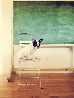 Smart Frenchie
