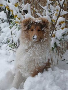 Snow puppy  so pretty