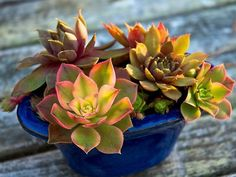 How to Make an Easy Succulent Container Garden Container Gardening Vegetables, Plants, Garden Plants, Plant Supplies, Flowers, Container Flowers, Container Plants, Pictures Of Succulents, Planting Succulents