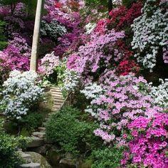 Wildflower Japanese Flower Garden Mix – Under The Sun Seeds