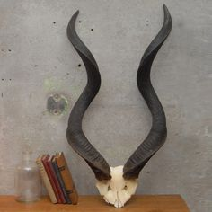 Just the horns themselves would also work, and probably collect less dust. For only $255.  Fab.com | Kudu Horns II