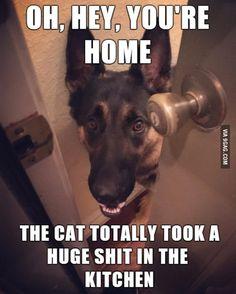 Door to Door Dog