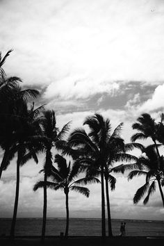 Palm Trees Nature Ocean Black And White Photography
