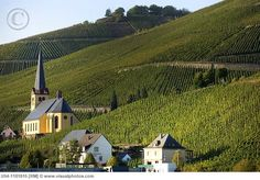 REISLING VINEYARDS IN MOSEL VALLEY. GERMANY