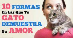 Los gatos dice 'Te amo' a sus humanos de varias maneras que no son inmediatamente evidentes a menos que sepas que señales buscar. http://mascotas.mercola.com/sitios/mascotas/archivo/2015/06/06/10-formas-gatos-dice-te-amo.aspx?utm_source=espanl&utm_medium=email&utm_content=mascotassaludables&utm_campaign=20170430&et_cid=DM142332&et_rid=1984991442