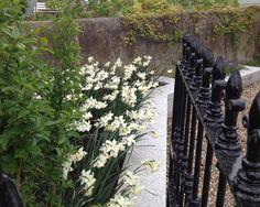 Agata Byrne, garden designer, landscape architect, florist, coastal residential garden, Sandycove, Dublin, Spring 2014, Summitto garden architecture & landscape design