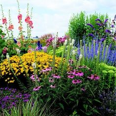 echinacea-coreopsis-liatris-delosperma-41178184 Perennial Garden Plans, Small Garden Plans, Flower Garden Plans, Flower Garden Pictures, Flowers Garden, Full Sun Garden, Easy Garden, Full Sun Perennials, Sun Loving Plants