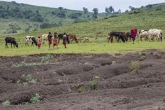 یک سوم خاک سیاره زمین به شدت دچار فرسایش شده و حاصلخیزی خاک با نرخ ۲۴ میلیارد تن در سال از بین میرود.  به گزارش آیسام و به نقل از ایسنا، کارشناسان با بیان اینکه یک سوم فرسودگی خاک زمین به دلیل کشاورزی است اظهار داشتند: این کاهشِ هشداردهنده که پیش بینی میشود با افزا�