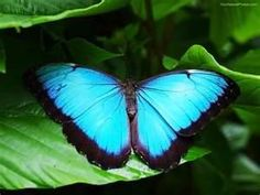 named Blue Morpho. It has been viewed 16608 times