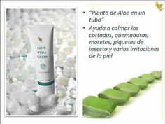 Top 10 productos Forever Living