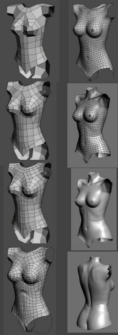 Female Torso Topology