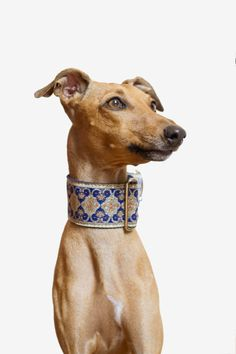 Style is a way to say who you are without having to speak - Rachel ZoeThank you for making something that screams I've been wanting a Martingale collar for a while now and this one is perfect! New Puppy, Puppy Love, Magyar Agar, Celebrity Dogs, Grey Hound Dog, Italian Greyhound, Pet Collars, Animal Photography, Animals Beautiful