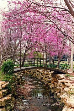 Redbuds - We had several Redbud trees around our house. This is not our yard but it was beautiful, never the less.